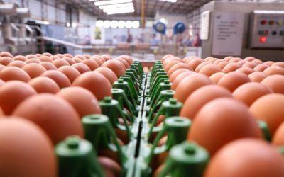 Granja que mantém galinhas sem gaiola recebe certificação nacional em Cascavel