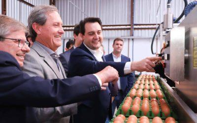 Sistema pioneiro de produção de ovos recebe certificação SISBI